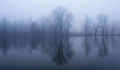 Along the Grand.....    explore (Kevin Povenz Thanks for the 2,900,000 views) Tags: 2017 january kevinpovenz westmichigan michigan ottawa ottawacounty ottawacountyparks grandriverpark fog foggy grandriver earlymorning early water reflection canon7dmarkii blue misty tree trees nature