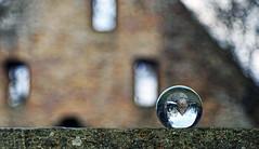 disibodenberg (joachim.d.) Tags: disibodenberg klosterruine nahe glan odernheim staudernheim rhinelandpalatinate rheinlandpfalz ruine hildegardvonbingen heiligehildegard glaskugel