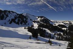 RU_201701_Rangiswangerhorn_017 (boleroplus) Tags: foret horizontal montagnes neige paysage skiderandonnee bolsterlang bayern germany de