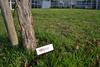 Export_TEDxESSCA_2fevrier-19 (tedxessca) Tags: autocollant tedxessca
