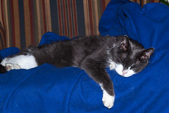 Sleeping Beauty (jwfuqua-photography) Tags: pets captainmorgan cats jwfuquaphotography jerrywfuqua