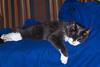 Sleeping Beauty (jwfuqua-photography) Tags: pets captainmorgan cats jwfuquaphotography jerrywfuqua