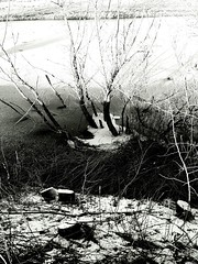 Experiments in b&w - submerged tree in ice - Wet Water No People Close-up Day Full Frame Nature Outdoors Backgrounds Tree ıce Cold Temperature (markjowen66) Tags: wet water nopeople closeup day fullframe nature outdoors backgrounds tree ıce coldtemperature