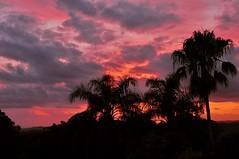 Dawn Over Coolangatta (armct) Tags: dawn sunrise horizon palmtrees subtropical silhouette coolangatta goldcoastairport airport queensland goldcoast red purple orange yellow colourful nikon d90 nikkor 18200mm cocos bangalow