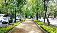 Reforma / Chapultepec, CDMX. (IrvingVic) Tags: motoxplay cdmx méxico travel city trees mexicocity paseodelareforma chapultepec