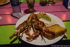 Caye Caulker lobster for dinner (Deve82) Tags: americacentrale belize cayecaulker centralamerica aragosta aragoste arthropod arthropods artropode artropodi cibo crostacei crostaceo crustacean crustaceans dish dishes evening food lobster lobsters piatti piatto sera