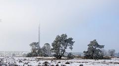 P1180040-10.jpg (loenatik) Tags: assel gelderland kootwijk nature nederland radiokootwijk sneeuw snow tree winter sky