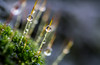 DSC_9339 (xav_roberts) Tags: macro closeup dew nikonv1 nikonft1 nikon sigma105mmf28mm water droplets morningdew rain raindrops