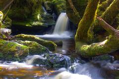 Frenchmans Cap Walk - Rainforest waterfall (cameroonjb) Tags: frenchmanscaphike wilderness tasmania australia waterfall