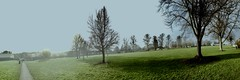 (Bristolcyprus) Tags: iphone5 horfieldcommon horfield common grass trees bristol