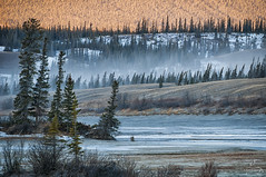 Winter's Palette (Quincey Deters) Tags: landscape january 2014 outdoor nature canada allrightsreserved â©quinceydeters colourimage northamerica alberta canadianrockymountains jaspernationalpark jasper forest tree layer ice sand grass snow morning winter windy wind lines layers horizontal white orange green blue