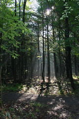 Sarsaparilla Trail, Ottawa, Ontario Canada (nikname) Tags: trees landscape landscapes ontariocanada canadiantrees canadianforest canadianparks provincialparks sarsaparillatrailottawaontario morninglight sunbeams shadows forestshadows summer summerskies