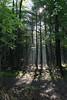 Sarsaparilla Trail, Ottawa, Ontario (nikname) Tags: trees landscape landscapes ontariocanada canadiantrees canadianforest canadianparks provincialparks sarsaparillatrailottawaontario morninglight sunbeams shadows forestshadows summer summerskies