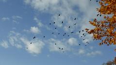 Λιμνη Καστοριας P1270684 (omirou56) Tags: λιμνηκαστοριασ ελλαδα ελλασ ευρωπη φυση 169ratio panasoniclumixdmctz40 ουρανοσ συννεφα φυλλα φθινοπωρο νοεμβρησ 2016 kastoria greece hellas outdoor sky clouds tree birds