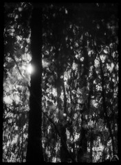 Reflections (ShimmeringGrains) Tags: sunny16 halfframe scannad zuikoforpenf bw monochrome olympuspenf kodakhc110b 135film filmphotography filmhalfframe zuiko702 zuikoprimelens olympuspen polypanf ©marieahlén penf002 halvformat svartvitt film blackandwhite kodakhc110 scanned polypanf50iso analog shimmeringgrains reflections impressionistic illusions sunflare