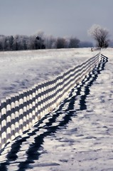 Fence and Shadow (lseankey) Tags: trees winter shadow snow fence landscape scenery northdakota ransomcounty nikond5000 nikon28300mm nd2015contest