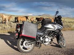 Horses and Horse Power.   Montana (montanatom1950) Tags: horses montana motorcycles helena suzuki dl650 vstrom motorcycletouring helenamontana