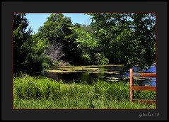 Yuck on the Water (the Gallopping Geezer 3.3 million + views....) Tags: lake water rural canon fence landscape outdoors countryside pond country yuck muck geezer corel 6d 2015 tamron28300