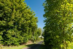 _DSC6349 (Adrian Royle) Tags: uk landscape nikon path walk lincolnshire hedge lane louth lincolnshirewolds bimble