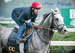 Clement Trainee (EASY GOER) Tags: horses horse ny newyork sports race canon track running racing 5d athletes races thoroughbred equine markiii