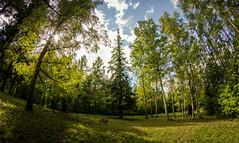 IMG_4849 (Daladys) Tags: wood trees canon eos czech outdoor fisheye brno ii lea cs birch 8mm t3i f35 umc 600d samyang kissx5