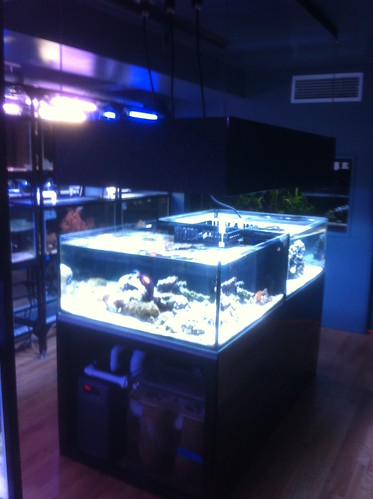 Custom Fish Systems - Fish Store - NYC - 2