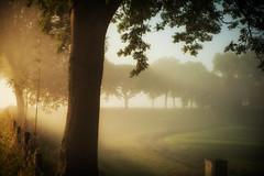 Netherlands, werelderfgoed de Beemster (Wijnand2) Tags: light holland tree netherlands dream beautifullight oldschool dike beemster dreamtree d700 nikon2470mm nikond700