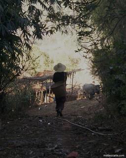 The Burmese Farmer
