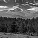 A Look Across Evergreen Trees to Longs Peak (Rocky Mountain National Park)