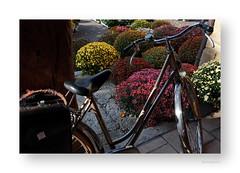 """Les chrysantémes sont arrivées et je suis parti • <a style=""""font-size:0.8em;"""" href=""""http://www.flickr.com/photos/88042144@N05/22059745929/"""" target=""""_blank"""">View on Flickr</a>"""