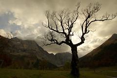 Rain dancer (Eng, Austria) (armxesde) Tags: autumn trees storm alps fall silhouette clouds austria tirol österreich pentax herbst alpen bäume ricoh eng k3 karwendel groserahornboden engintirol