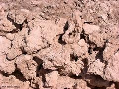 Halite (Sodium Chloride) Rock Salt Acretions - Salar de Atacama near Socaire, San Pedro de Atacama, El Loa Province, Antofagasta Region, Chile (Black Diamond Images) Tags: chile southamerica outdoor salt saltlake salar altiplano sanpedrodeatacama salardeatacama socaire antofagasta amricadosul sodiumchloride amriquedusud halite rocksalt zuidamerika sudamrica northernchile losflamencosnationalreserve tocanao reservanacionallosflamencos antofagastaregion elloaprovince