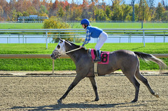 "2015-10-30 (2) r1 Lauralea Glaser on #8 Unbridledrebellion (JLeeFleenor) Tags: photos photography md marylandracing marylandhorseracing laurelpark femaleathletes femalejockey jockey جُوكِي ""赛马骑师"" jinete ""競馬騎手"" dżokej jocheu คนขี่ม้าแข่ง jóquei žokej kilparatsastaja rennreiter fantino ""경마 기수"" жокей jokey người horses thoroughbreds equine equestrian cheval cavalo cavallo cavall caballo pferd paard perd hevonen hest hestur cal kon konj beygir capall ceffyl cuddy yarraman faras alogo soos kuda uma pfeerd koin حصان кон 马 häst άλογο סוס घोड़ा 馬 koń лошадь grey gray winner maryland"