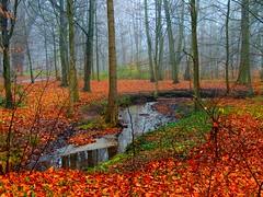 Wald im Schlosspark (Sophia-Fatima) Tags: forest deutschland bach brook wald ludwigslust mecklenburgvorpommern englischerlandschaftspark ludwigslusterschlosspark
