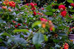 Fotos Invierno 2015 (ad_n61) Tags: flores blanco luz de hojas ventana navidad calle arquitectura agua y gente comida negro flor fuente ciudad modelo personas zaragoza perro fujifilm fuego balcon diciembre dulce maquina adornos escribir 2015 vantanas xt1 verdemercadillo