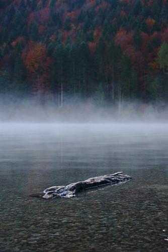 Fogged log