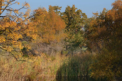 Colors of Fall (rschnaible) Tags: california autumn wild usa west color fall water colors landscape us pond colorful warm outdoor western wetlands marsh tones