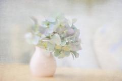 Quiet Days... (jm atkinson) Tags: texture hydrangea vase pastel table still light