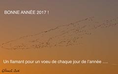 Flamant rose en Petite Camargue - IMG_0462 (6franc6) Tags: occitanie languedoc gard décembre 2016 31 petite camargue 6franc6 fabuleuseenfêtesf leverdusoleil