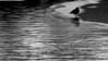 silouhette (Darek Drapala) Tags: silhouette silence silkypix silver bw blackwhite blackandwhite water waterscape panasonic poland polska panasonicg5 park reflection reflects cool lumix light nature