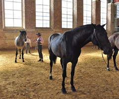 Córdoba (milka rabasa) Tags: nikond5000 caballo horse córdoba caballoandaluz purasangre caballerizasrealesdecórdoba andalucía