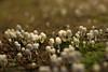 Mushrooms (Praphul.T.) Tags: mushroom praphul irinjalakuda photography canon 550d kerala plant greenery