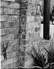 Meg Foster (Foster.Child) Tags: 4x5 analogphotographer blackandwhite collage film fosterchildphotography largeformat margaretfoster megfoster photographer scad savannahcollegeofartanddesign freelance