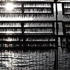 Monte Isola, Lago d'Iseo, Italia (pom.angers) Tags: canoneos400ddigital 2009 february sensole localitàsensole monteisola lagodiseo lombardia italia italy europeanunion fish fishing 100 150