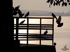 Shadows (Mayank Pradhan) Tags: lightandshadow silhouette sunshine shine birds lake nikond5200 nikon