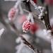 Winter tale (Ani ♠ Melikyan) Tags: winter snow frozen ukraine red animelikyan animelikyanphotography украина зима