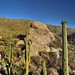 The Moon and Javelina Rocks as a Backdrop for a Saguaro Cactus