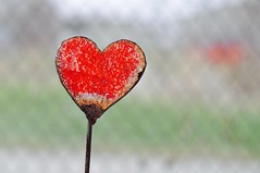heart echo (ladybugdiscovery) Tags: heart echo red bokeh fence dof blur rust stake gardenstake garden hbw happybokehwednesday