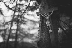 Christ Askew (Lord Demise) Tags: canon 70d eos deutschland germany rheinlandpfalz rhinelandpalatinate waldesch 50mm niftyfifty bw blackandwhite black white schwarz weis christ jesus christus kruzifix crucifix cross baum tree inri schief askew