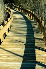 S Curve (G.D. Jewell II) Tags: millsboro delaware thepeninsula beach scurve walkway march d3400 nikon gdjewellii davejewell georgejewell 1855mm kitlens usa america photo light color heartawards vanishing sexy sun sunlight ocean sea water sky sunshine primavera nature landscape scionofhelios davidjewell httpswwwfacebookcomdavejewell1291 afpnikkor1855mm13556g